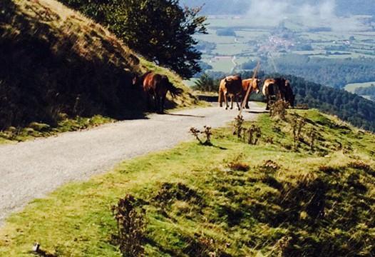Camino-de-Santiago-2014-002